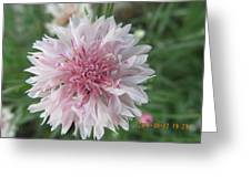 Just Very Pretty Pink Greeting Card
