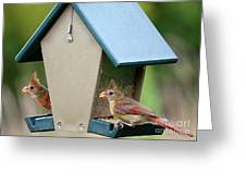 Juvenile Cardinals On Feeder Greeting Card