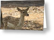 Juvenile Deer Greeting Card