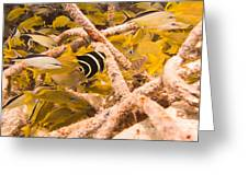 Juvenile French Angelfish Among French Greeting Card