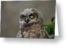Juvenile Great Horned Owl Greeting Card