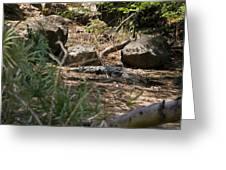 Juvenile Nile Crocodile Greeting Card