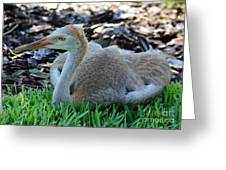 Juvenile Sandhill Crane At Rest Greeting Card