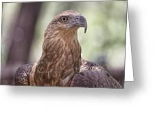 Juvenile Sea Eagle Greeting Card