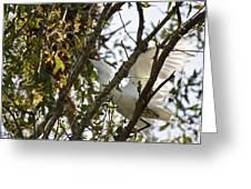 Juvenile Snowy Egret Greeting Card