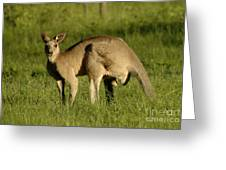 Kangaroo Male Greeting Card by Bob Christopher