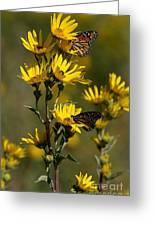 Kansas Monarchs Greeting Card