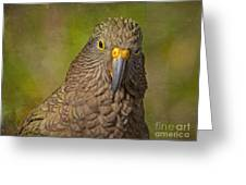Kea Parrot Greeting Card