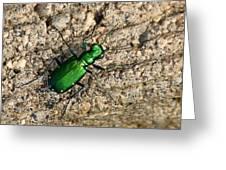 Keen Green Greeting Card
