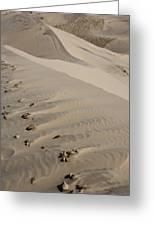 Kelso Dune Tops Greeting Card