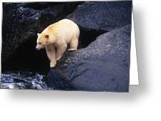 Kermode Bear On Boulder Hunting Salmon Greeting Card
