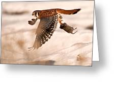 Kestral In Flight Greeting Card