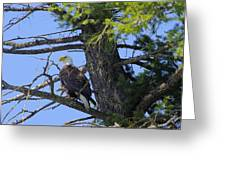 Kettle River Eagle 2012 Greeting Card