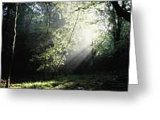 Killarney National Park, Co Kerry Greeting Card