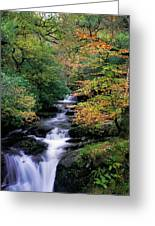 Killarney National Park, Ring Of Kerry Greeting Card