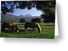 Killarney,co Kerry,irelandtwo Horses Greeting Card