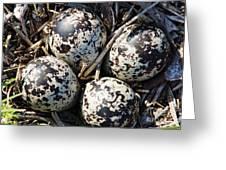 Killdeer Eggs 2 Greeting Card