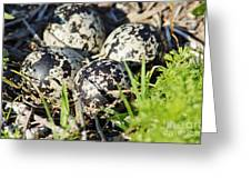 Killdeer Eggs Greeting Card by Lynda Dawson-Youngclaus