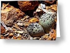 Killdeer Nest Greeting Card
