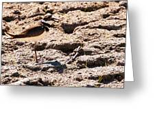 Killdeer Pitching A Fit Greeting Card