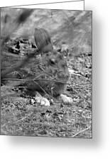 King Hare Greeting Card