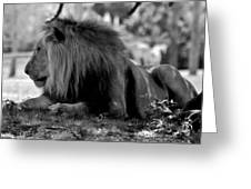 King Of Cats Greeting Card