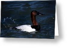 King Of Ducks Greeting Card