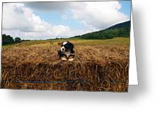 King Of The Hay Greeting Card
