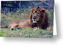 King Of Zoo Greeting Card