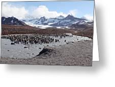 King Penguin Breeding Colony Greeting Card