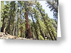 Kings Canyon National Park Greeting Card
