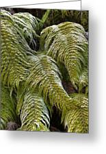 Kiokio Blechnum Novae-zelandiae Covered Greeting Card