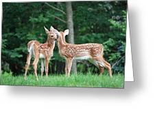 Kiss Me Deer Greeting Card