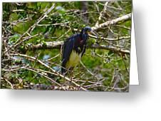 Kissimmee Bird 2 Greeting Card