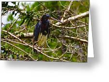 Kissimmee Bird Greeting Card