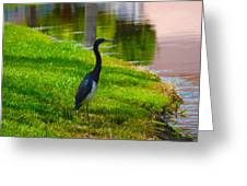 Kissimmee Pond Bird Greeting Card