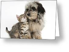 Kitten And Daxie-doodle Puppy Greeting Card