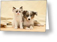 Kitten And Pup Greeting Card by Jane Burton