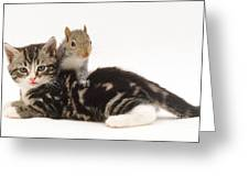 Kitten And Squirrel Greeting Card by Jane Burton