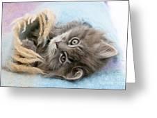 Kitten In Blanket Greeting Card