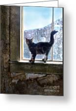 Kitten On Windowsill Of Abandoned House Greeting Card