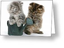 Kittens And Watering Can Greeting Card