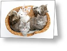 Kittens In Basket Greeting Card