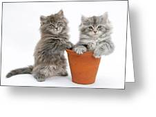 Kittens In Pot Greeting Card