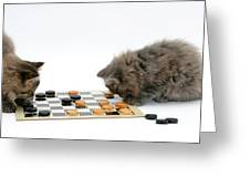 Kittens Playing Checkers Greeting Card