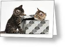 Kittens Playing With Box Greeting Card