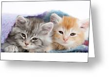 Kittens Under Blanket Greeting Card