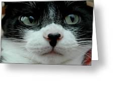 Kitty Closeup Greeting Card