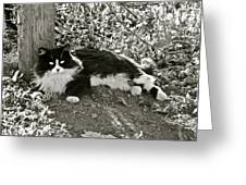 Kitty In A Vineyard Greeting Card