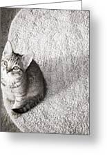 Kitty's Shadow Greeting Card
